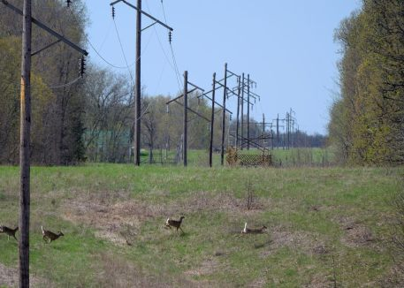 Clear cut strips for power lines provide glimpses of wildlife.