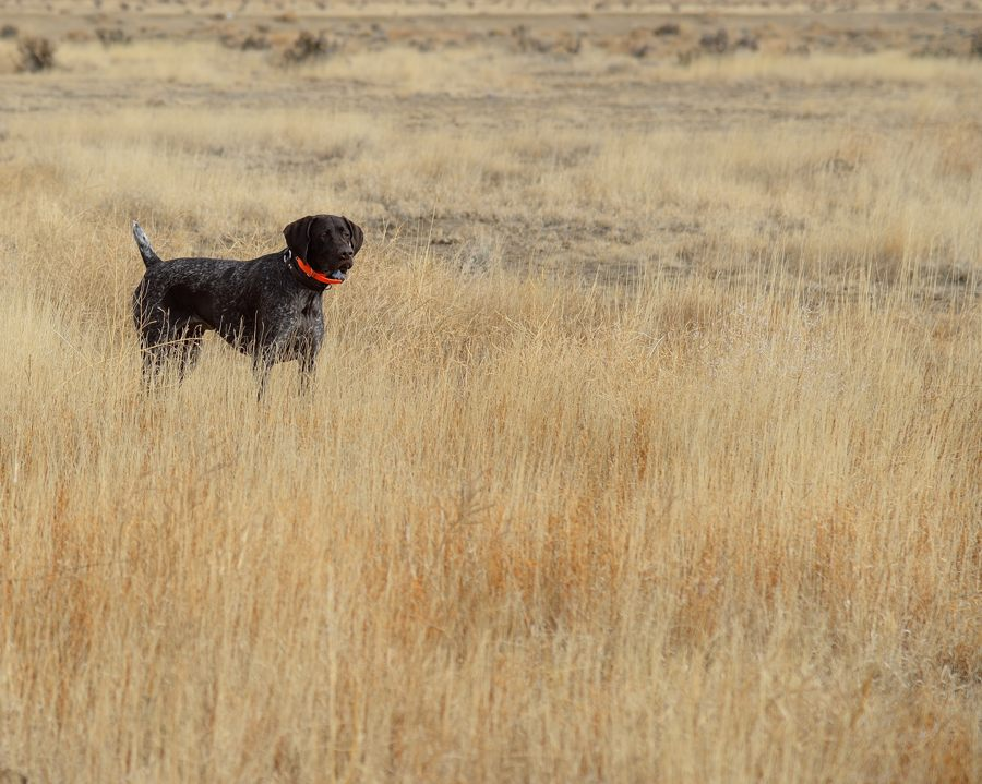 Colorado Walk-In Area Bird Hunting | Birdhunter