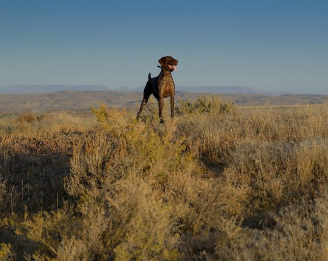 Tex loves hunting the west.