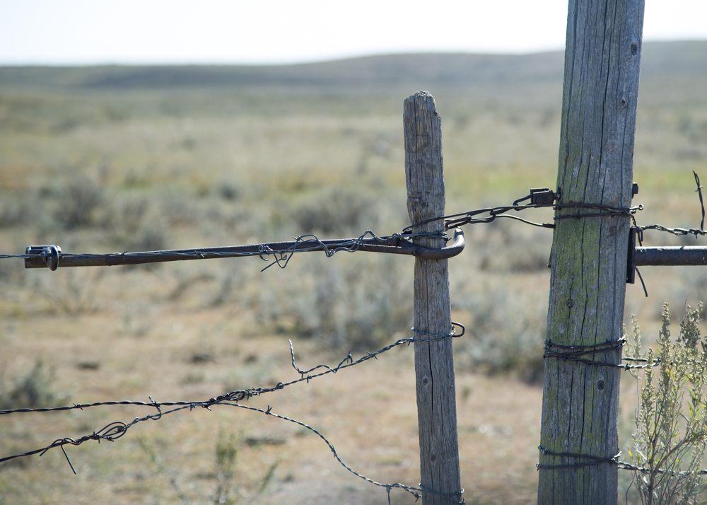 Montana Sharptails Birdhunter