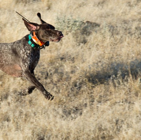 Pepper, Tex's brother, on the run.