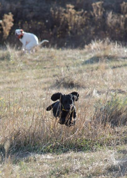 One dog poops, another dog flies